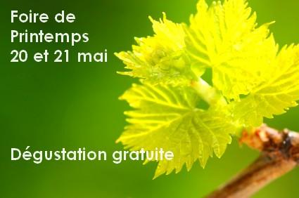 printemps-vigne